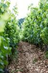 Soil in Meursault